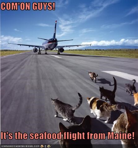 airplane airport lolcats seafood - 3706551040