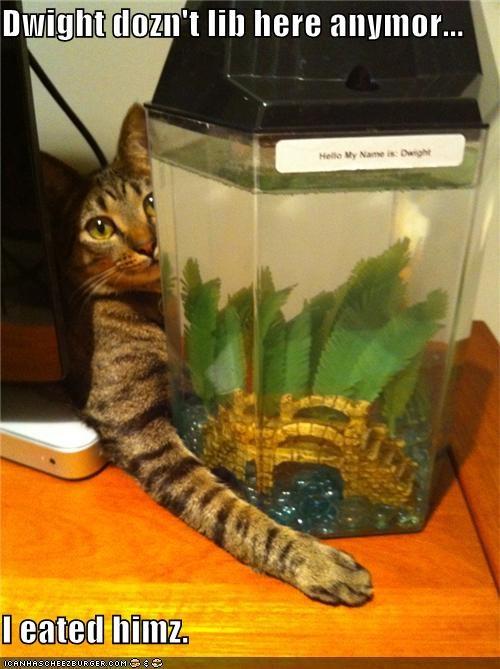 fish lolfish murder nom nom nom oh noes - 3706558720