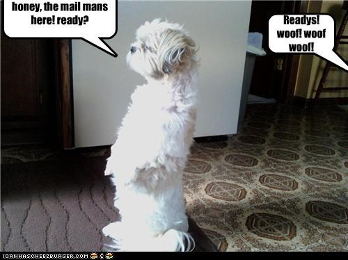 honey, the mail mans here! ready? Readys! woof! woof woof!