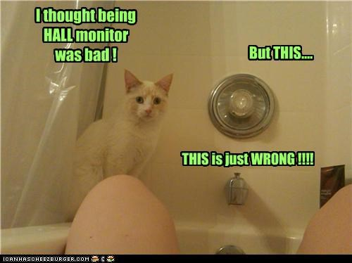 bad bathtub being cannot unsee caption captioned cat do not want hall monitor this thought unsee wrong - 3708590080