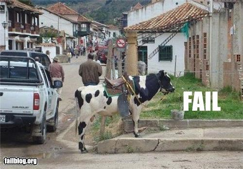 cow,failboat,horse,pack animal,saddle
