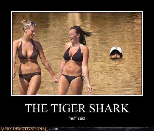 Sexy Ladies,shark,Tiger Woods