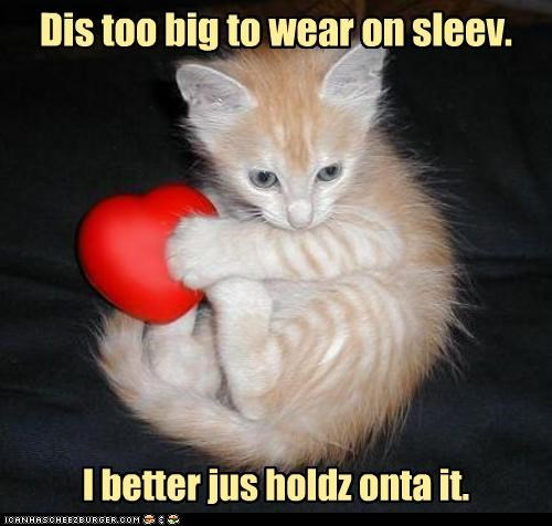 adage alternative caption captioned cat cliché cute heart on sleeve holding kitten sweet tabby too big - 3710779648