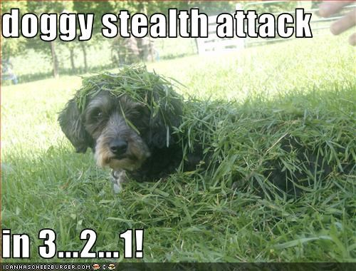 grass,outside,sneak attack,terrier mix
