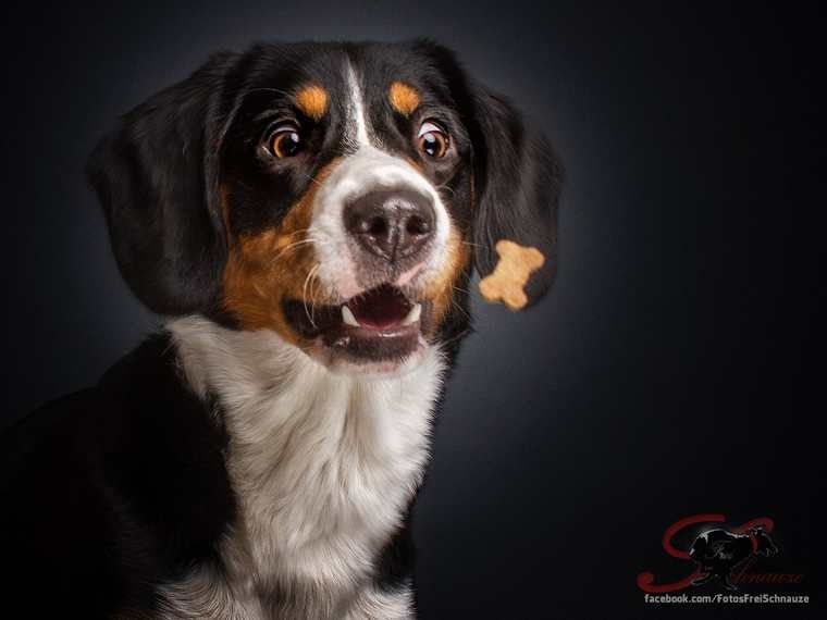 photos of dogs catching treats in the air