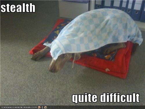 blanket,difficulties,hiding,stealth,weimaraner