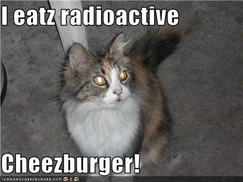 Cheezburger Image 3712837120