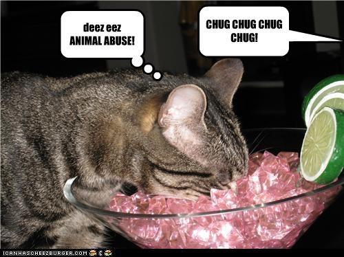 Cheezburger Image 3713721856