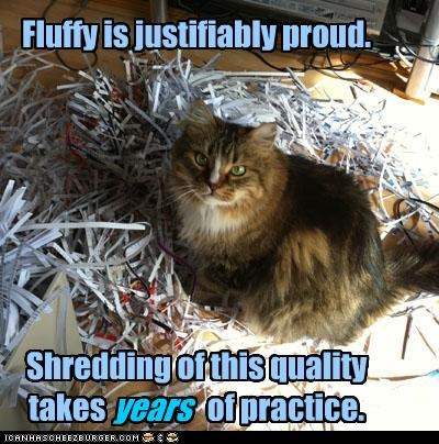 Fluffy is justifiably proud. Shredding of this quality takes of practice. years