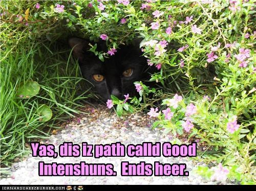 called,caption,captioned,cat,ends,good,here,intentions,path,yes
