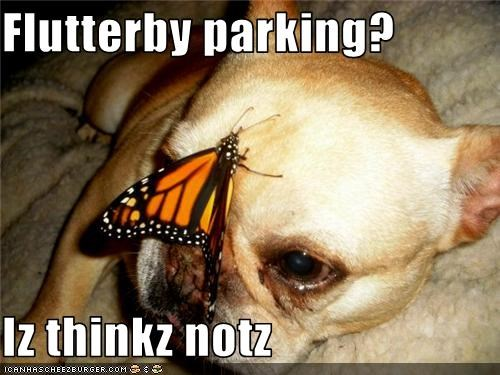 butterfly Hall of Fame parking whatbreed - 3717584896