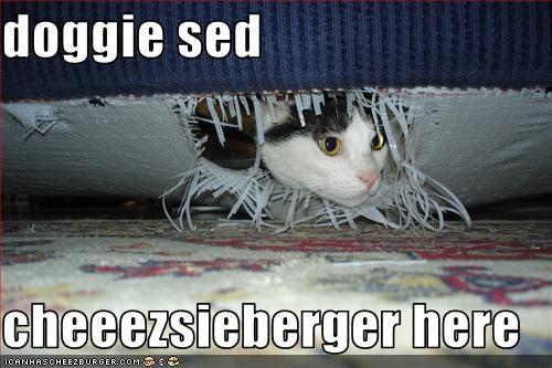 Cheezburger Image 3717785088