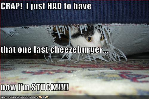Cheezburger Image 3718686720