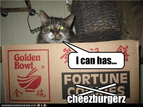 Cleverness Here Cleverness Here cheezburgerz I can has...