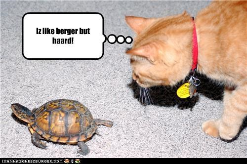 Cheezburger Image 3722266368