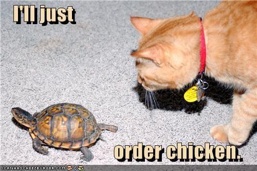 Cheezburger Image 3722500864