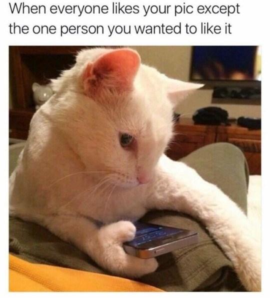 Funny tumblr posts cats text