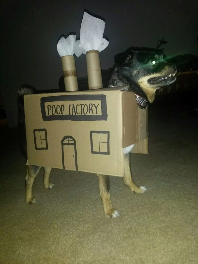 a funny list of failed costumes for cats and dogs