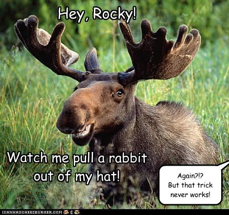 Hey, Rocky! Watch me pull a rabbit out of my hat! Again?!? But that trick never works!