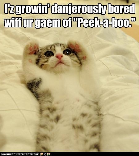 bored caption captioned cat dangerous dangerously dislike displeased do not want game kitten peek a boo - 3724047104