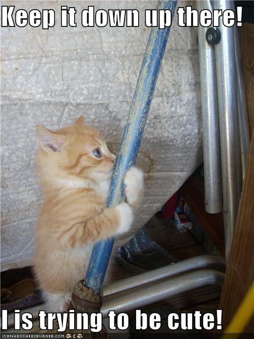 cute kitten shh - 3724396800