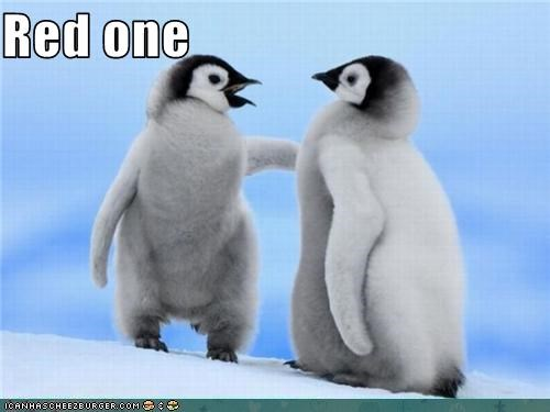 cute,lolbirds,lolpenguins