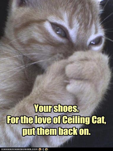 caption captioned cat ceiling cat do not want request shoes smell stench stinks tabby - 3725467136