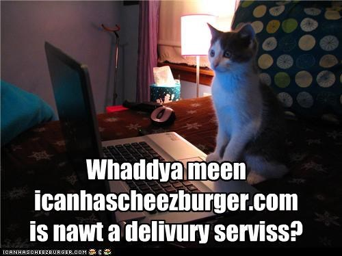 caption,captioned,cat,confused,delivery service,ichc,indignant,lies,not,surprised,upset
