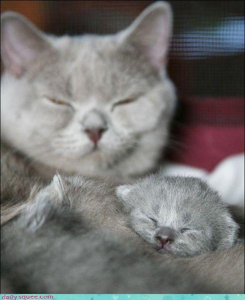 Fluffy Friday,kitten,mama