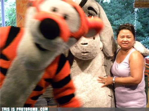 Celebrity Edition disney eeyore tigger vacation - 3726934528