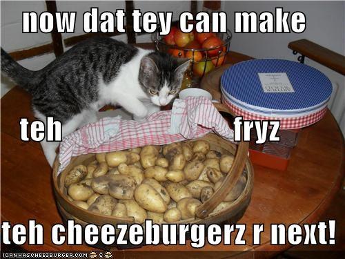 Cheezburger Image 3727205376
