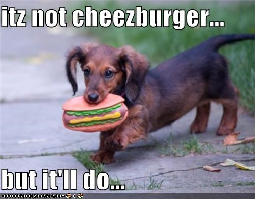 Cheezburger Image 3728016640