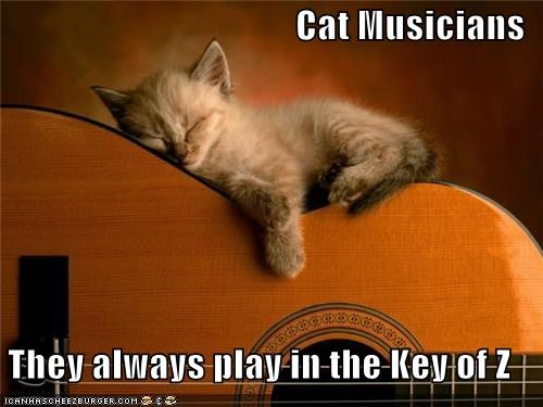 cute guitar kitten Music nap sleeping - 3728499712
