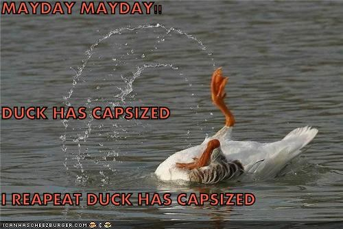 caption lolducks oh noes water - 3728512768