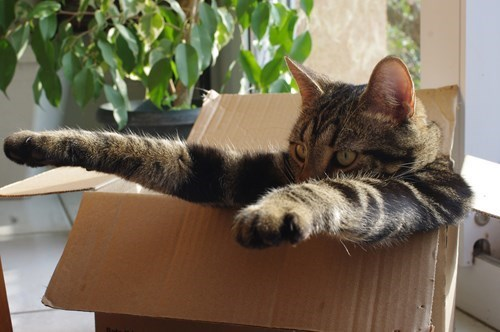 list box if i fits i sits cats are weird Cats - 372997