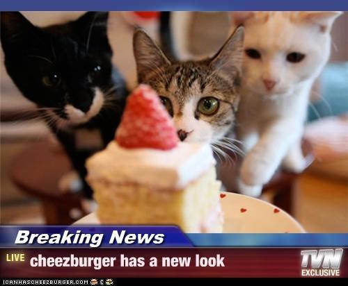 Cheezburger Image 3729987584