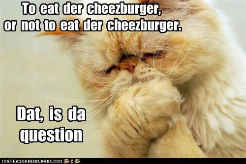 Cheezburger Image 3730152448