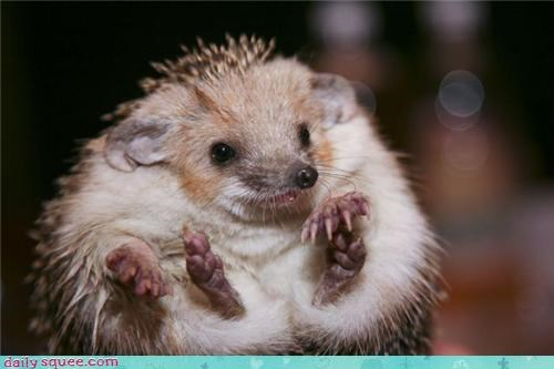 hedgehog ugly weird - 3730570752