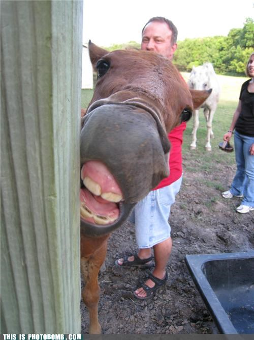 Animal Bomb,derp,face,farm,horse,teeth