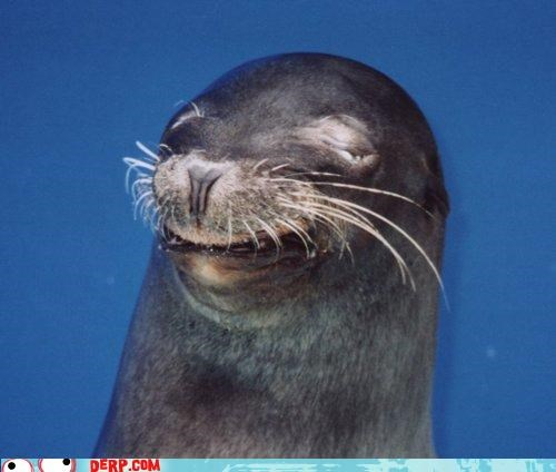 critters,cute,seal,smile