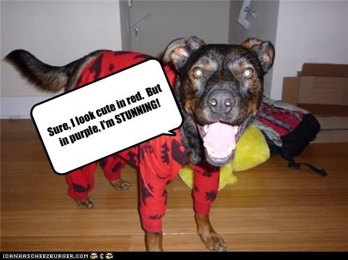Cheezburger Image 3732057856
