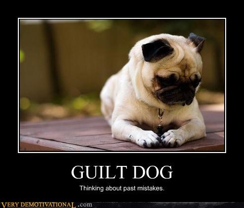 animals cute dogs guilt mistakes pug regret Sad - 3732634880