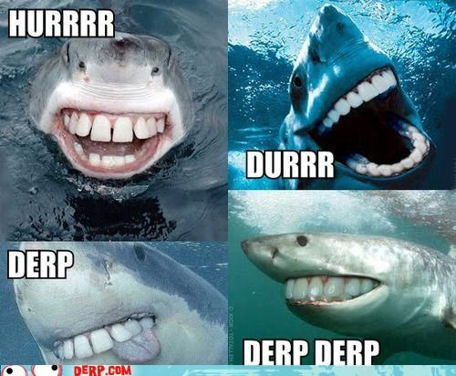 derp,jaws,shark,teefs