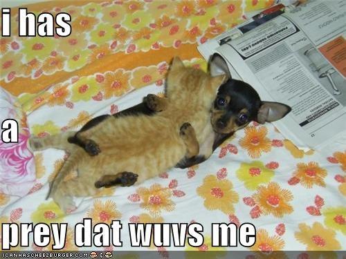 i has a prey dat wuvs me