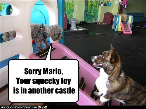 Sorry Mario, Your squeeky toy is in another castle