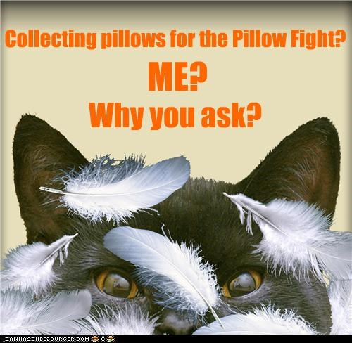 Collecting pillows for the Pillow Fight?  . . . . .