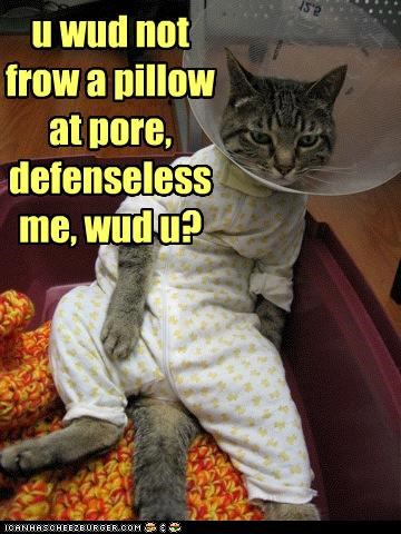 u wud not frow a pillow at pore, defenseless me, wud u?