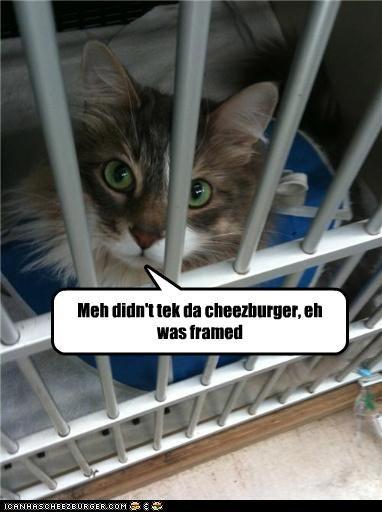 Cheezburger Image 3734601472