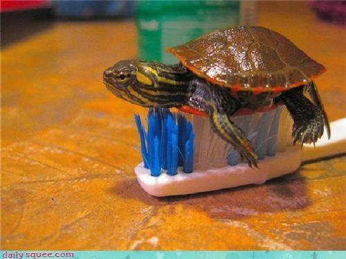 baby tiny turtle - 3734686720