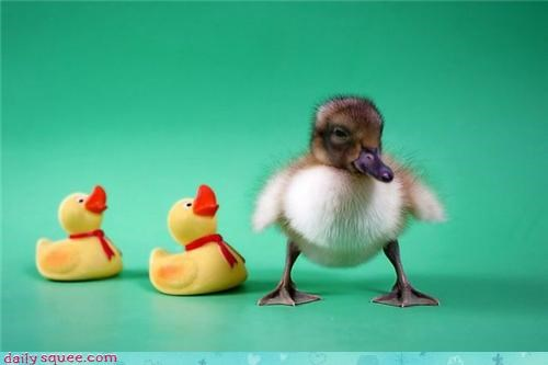 duck squee spree squee-q - 3734689536